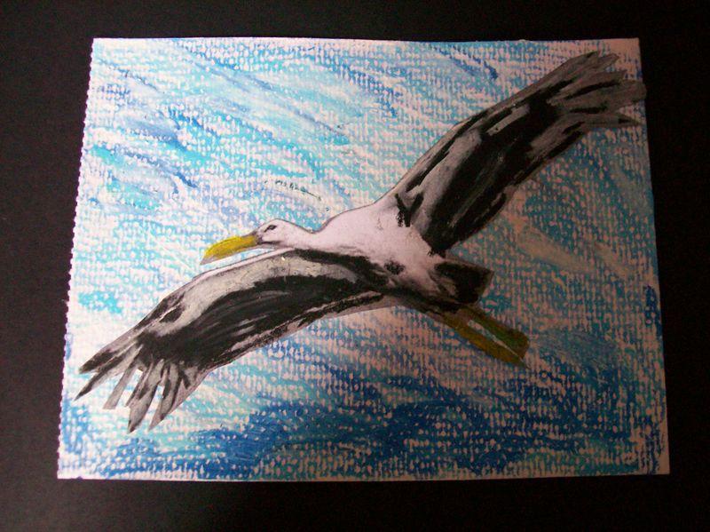 Stork 002